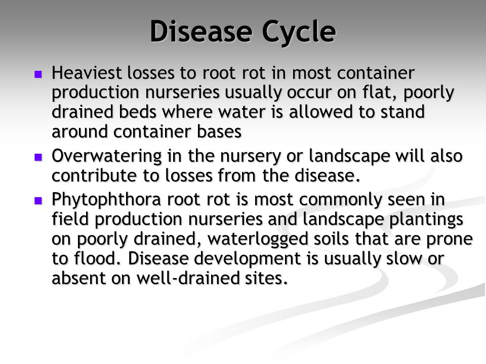 Disease Cycle Heaviest losses to root rot in most container production nurseries usually occur on flat, poorly drained beds where water is allowed to