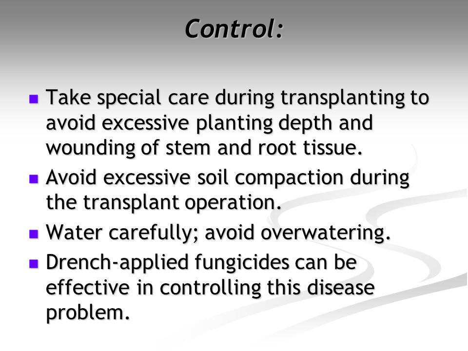 Control: Take special care during transplanting to avoid excessive planting depth and wounding of stem and root tissue. Take special care during trans