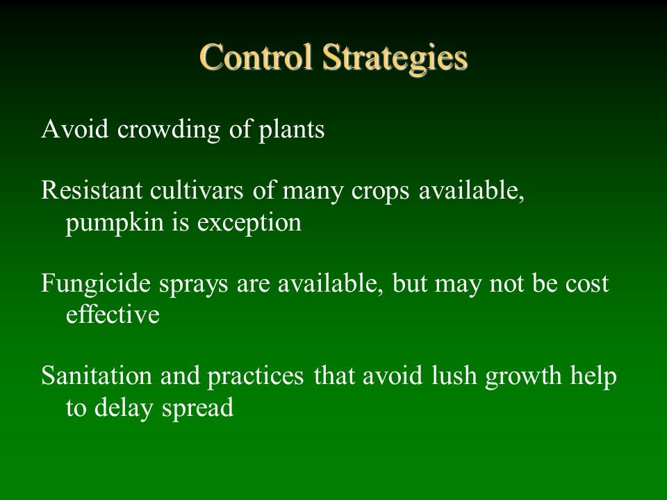 Control Strategies Avoid crowding of plants Resistant cultivars of many crops available, pumpkin is exception Fungicide sprays are available, but may