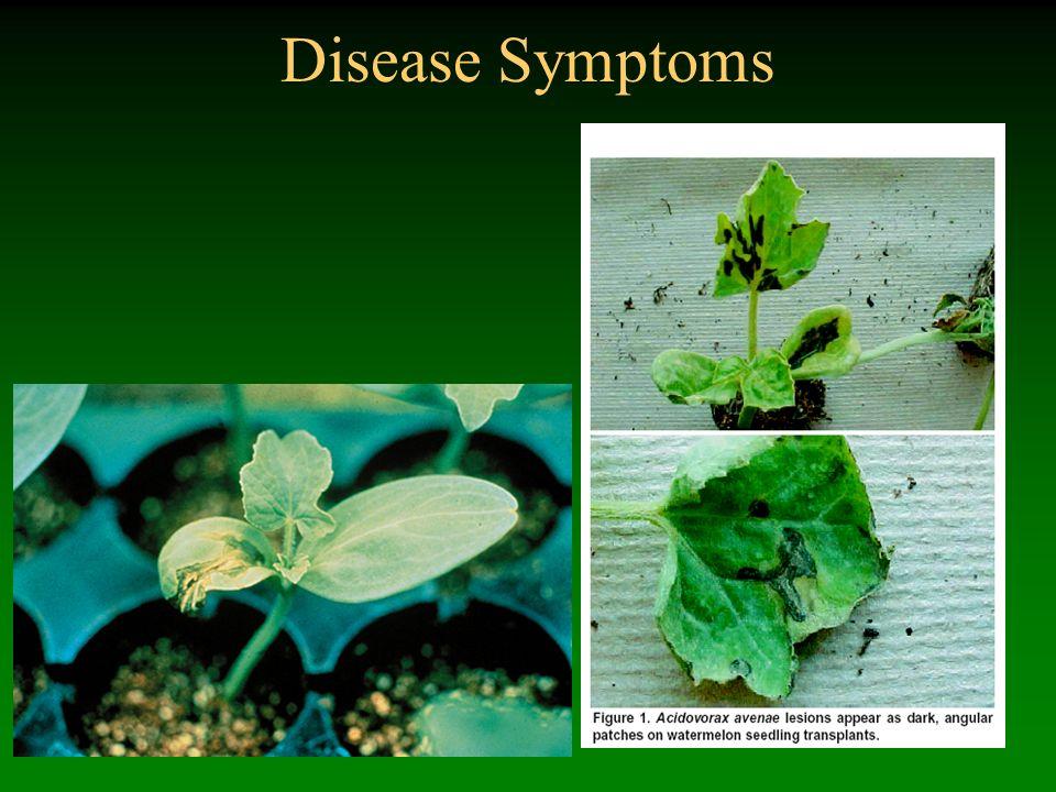 Disease Symptoms