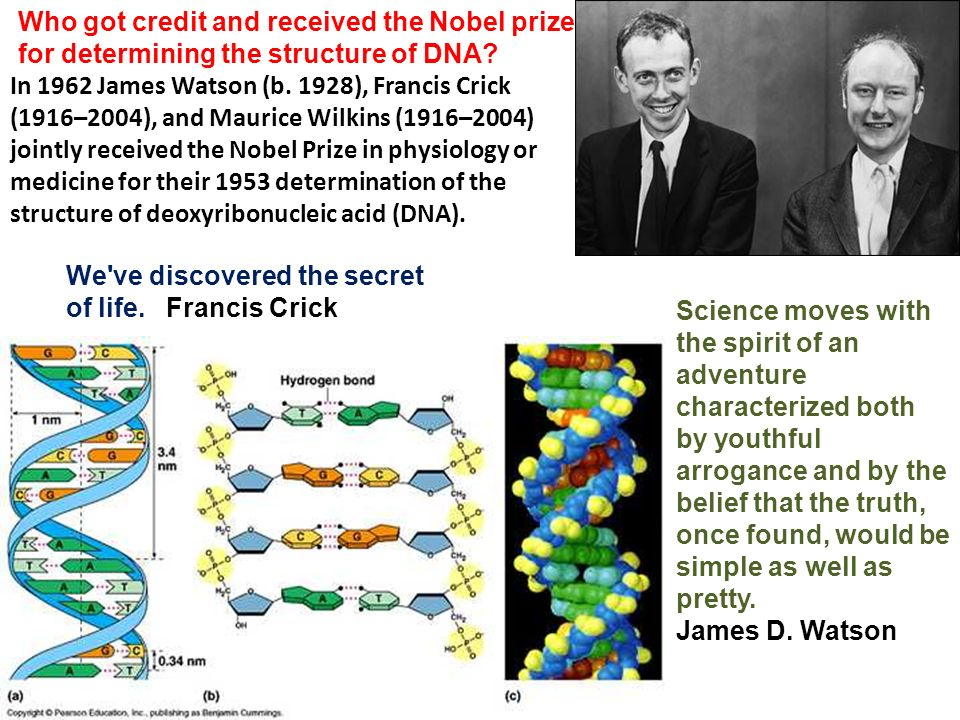 Who got credit and received the Nobel prize for determining the structure of DNA.
