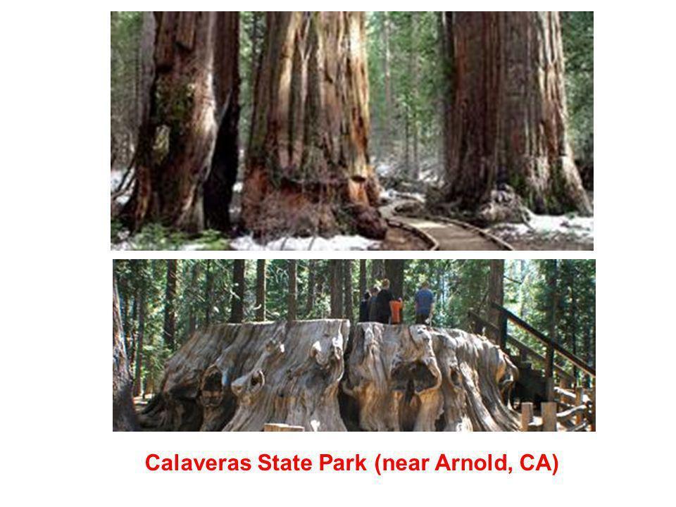Calaveras State Park (near Arnold, CA)