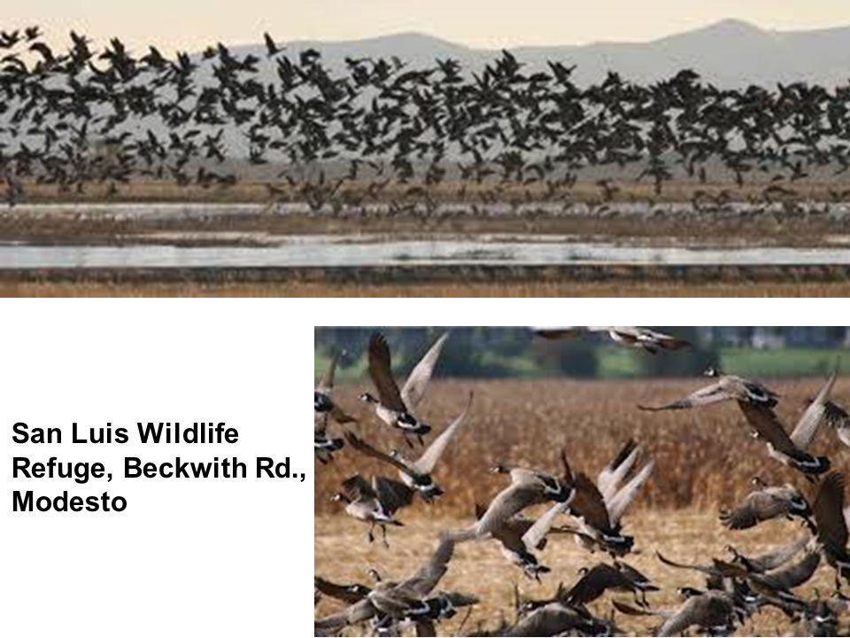 San Luis Wildlife Refuge, Beckwith Rd., Modesto