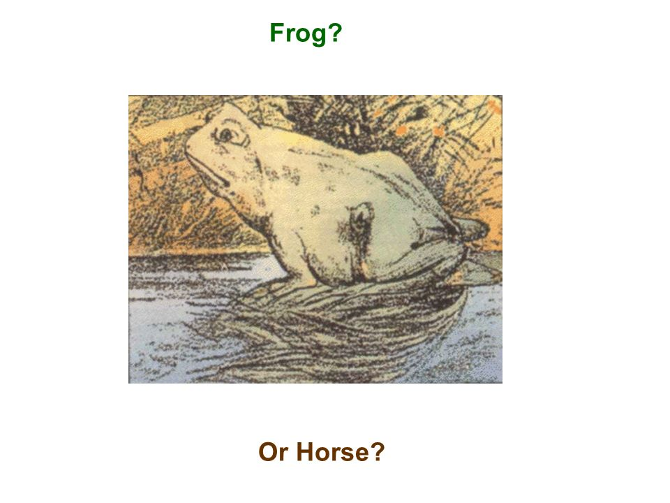 Frog? Or Horse?