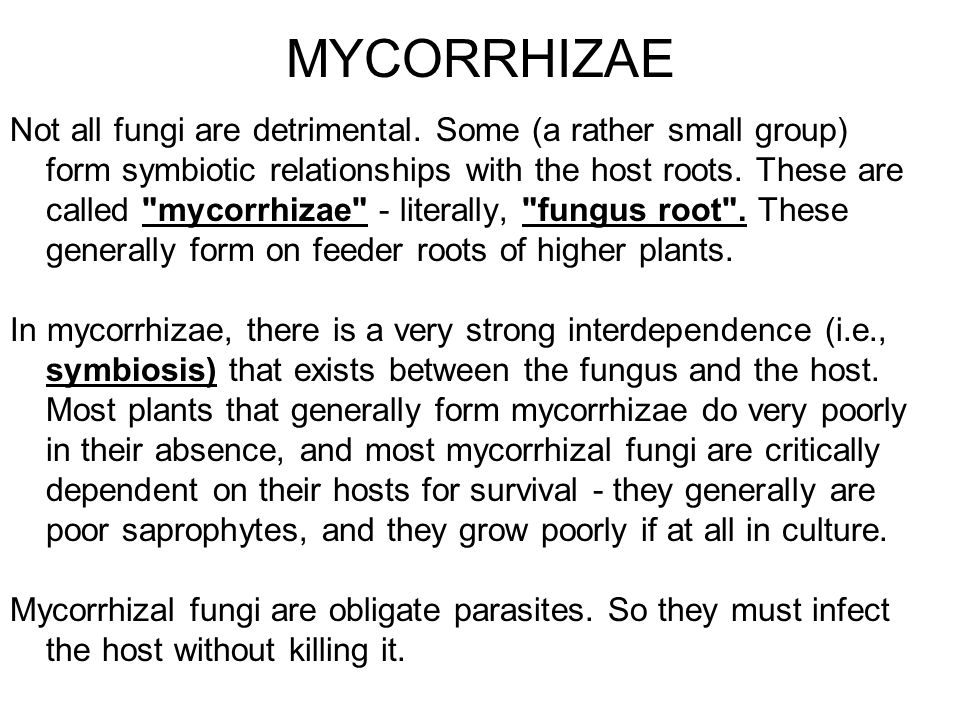 MYCORRHIZAE Not all fungi are detrimental. Some (a rather small group) form symbiotic relationships with the host roots. These are called