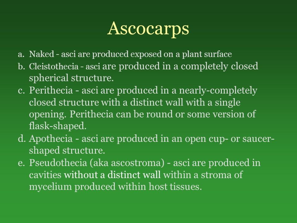 Ascocarps a.Naked - asci are produced exposed on a plant surface b.Cleistothecia - asci are produced in a completely closed spherical structure.
