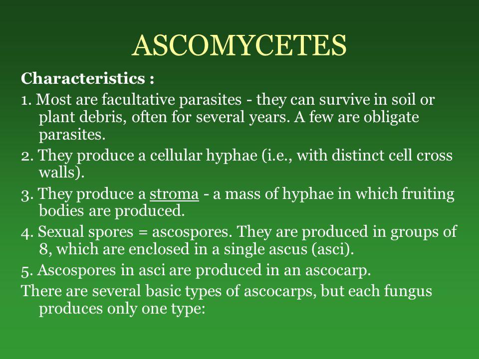 ASCOMYCETES Characteristics : 1.