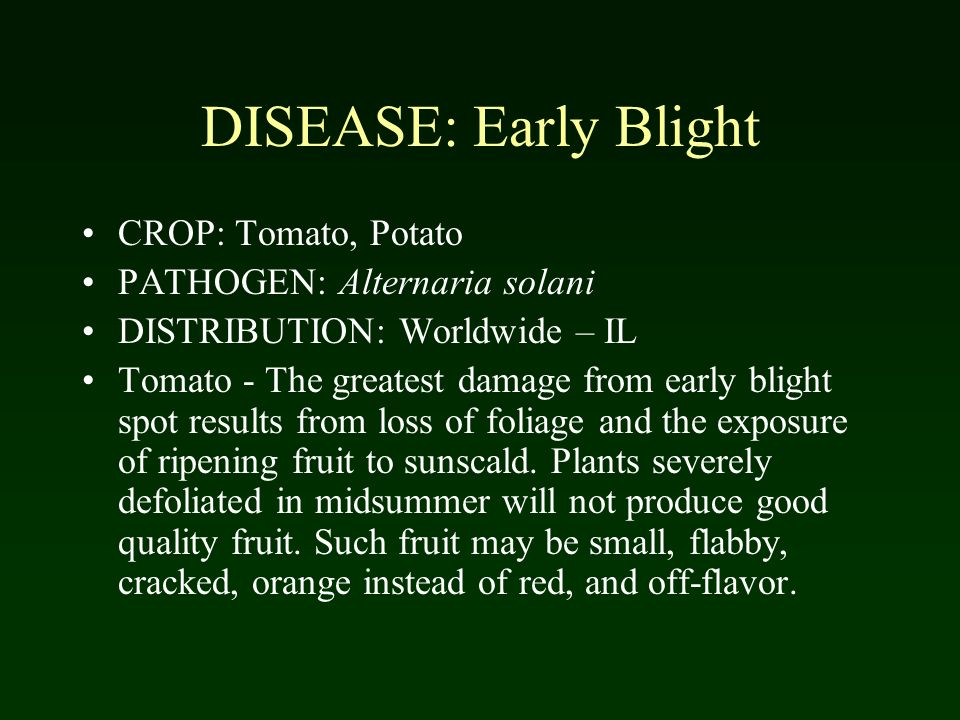 DISEASE: Early Blight CROP: Tomato, Potato PATHOGEN: Alternaria solani DISTRIBUTION: Worldwide – IL Tomato - The greatest damage from early blight spot results from loss of foliage and the exposure of ripening fruit to sunscald.