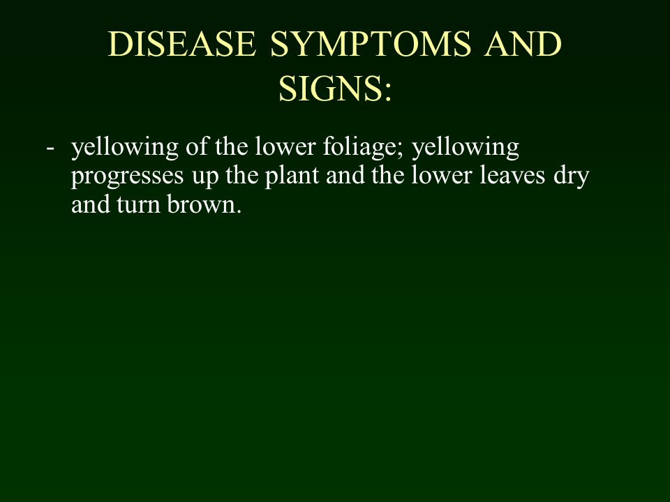 DISEASE SYMPTOMS AND SIGNS: -yellowing of the lower foliage; yellowing progresses up the plant and the lower leaves dry and turn brown.