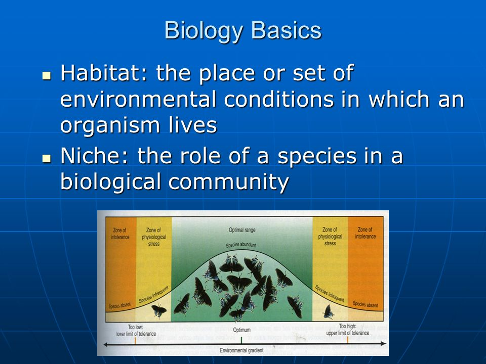 Biology Basics Habitat: the place or set of environmental conditions in which an organism lives Habitat: the place or set of environmental conditions in which an organism lives Niche: the role of a species in a biological community Niche: the role of a species in a biological community
