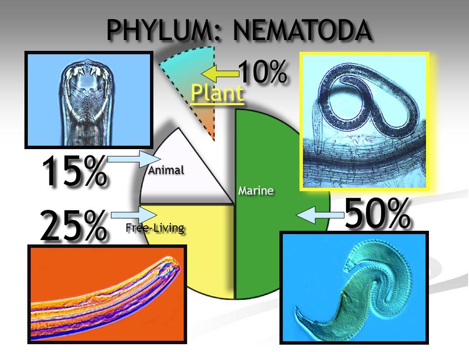 7 50% 10% 15% 25% Plant Animal Free-Living Marine PHYLUM: NEMATODA
