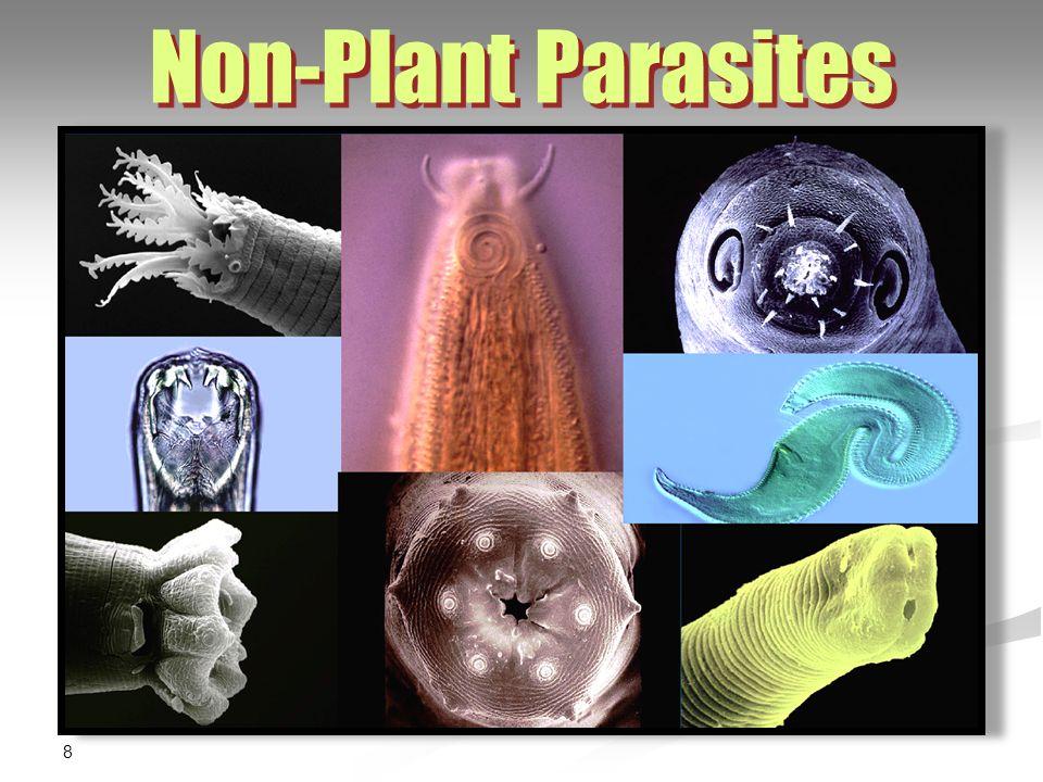 8 Non-Plant Parasites
