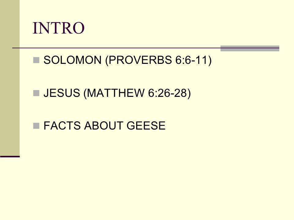 INTRO SOLOMON (PROVERBS 6:6-11) JESUS (MATTHEW 6:26-28) FACTS ABOUT GEESE