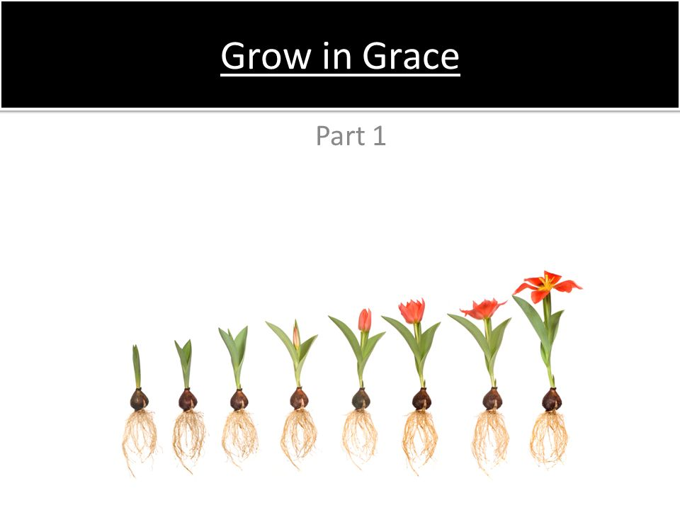 Grow in Grace Part 1