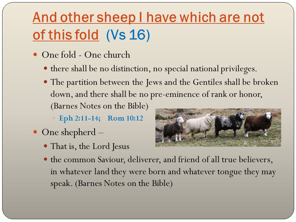 And other sheep I have which are not of this fold (Vs 16) One fold - One church there shall be no distinction, no special national privileges.