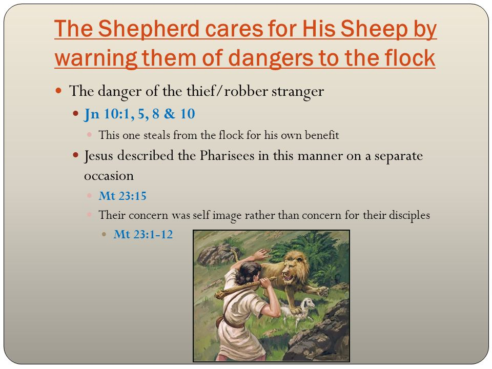 The Shepherd cares for His Sheep by warning them of dangers to the flock The danger of the thief/robber stranger Jn 10:1, 5, 8 & 10 This one steals from the flock for his own benefit Jesus described the Pharisees in this manner on a separate occasion Mt 23:15 Their concern was self image rather than concern for their disciples Mt 23:1-12
