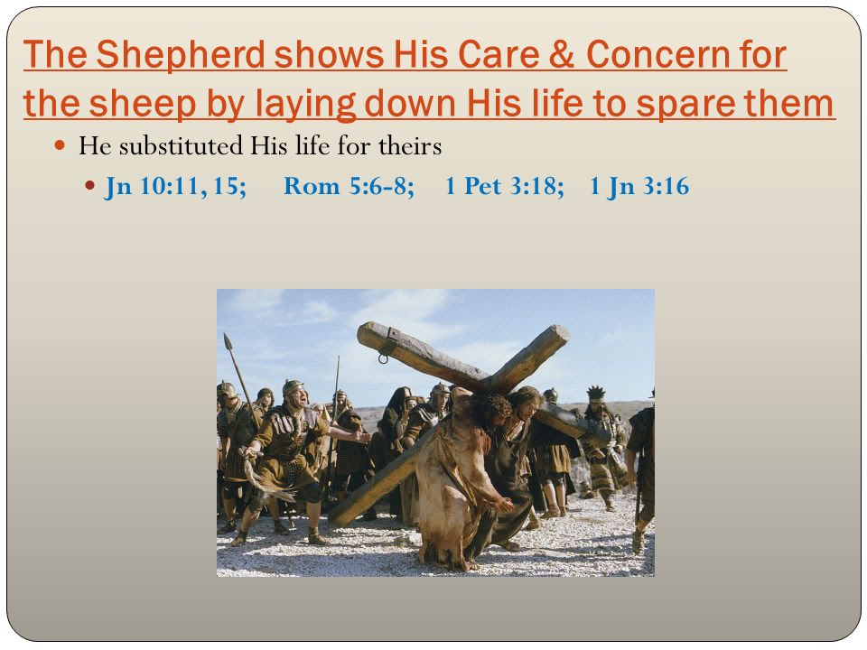 The Shepherd shows His Care & Concern for the sheep by laying down His life to spare them He substituted His life for theirs Jn 10:11, 15; Rom 5:6-8; 1 Pet 3:18; 1 Jn 3:16