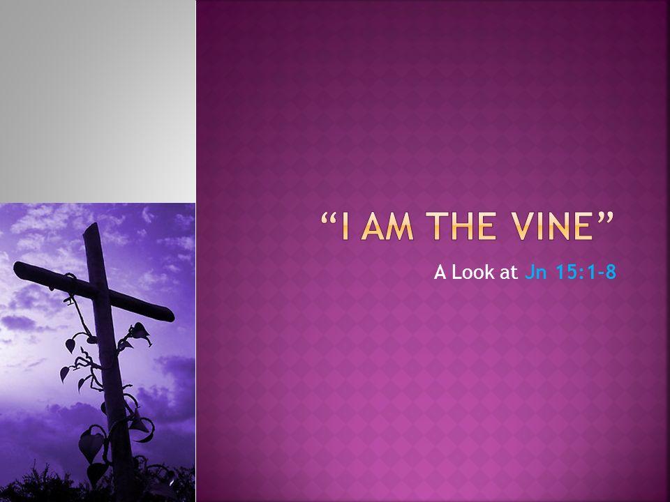 A Look at Jn 15:1-8
