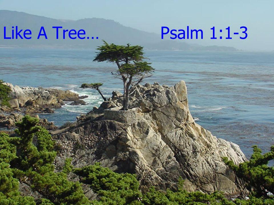 Like A Tree… Psalm 1:1-3