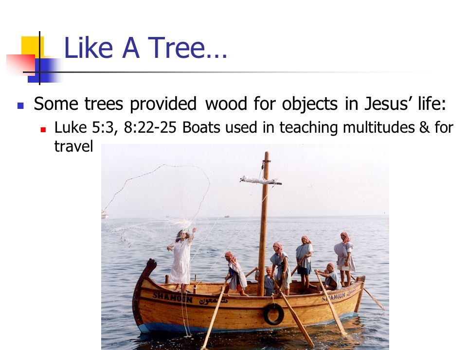 Like A Tree… Some trees provided wood for objects in Jesus life: Luke 5:3, 8:22-25 Boats used in teaching multitudes & for travel