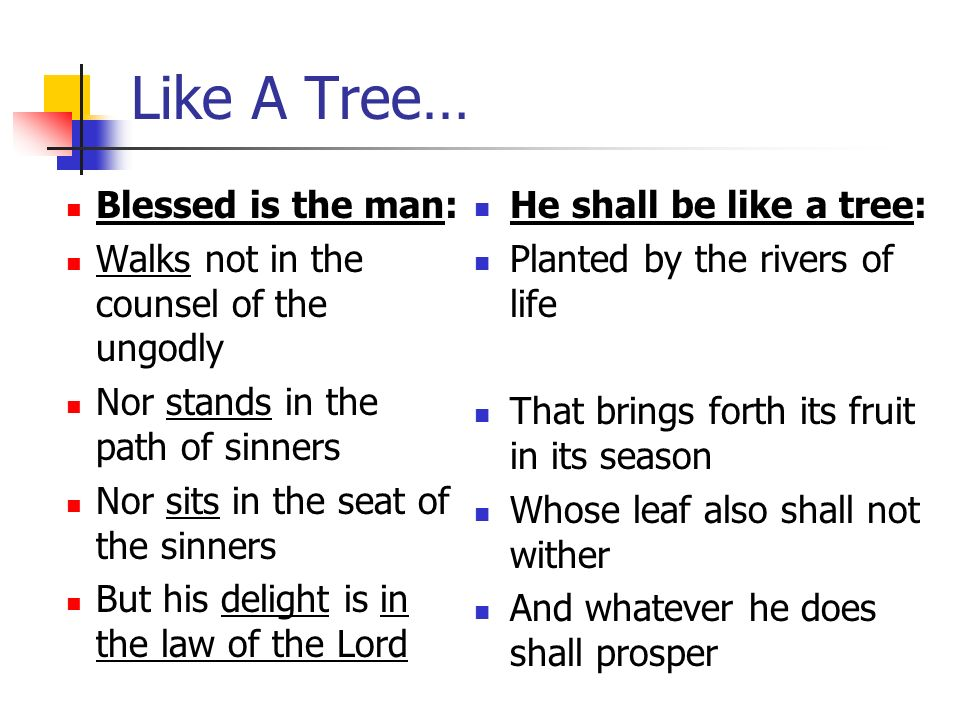 Like A Tree… Blessed is the man: Walks not in the counsel of the ungodly Nor stands in the path of sinners Nor sits in the seat of the sinners But his delight is in the law of the Lord He shall be like a tree: Planted by the rivers of life That brings forth its fruit in its season Whose leaf also shall not wither And whatever he does shall prosper
