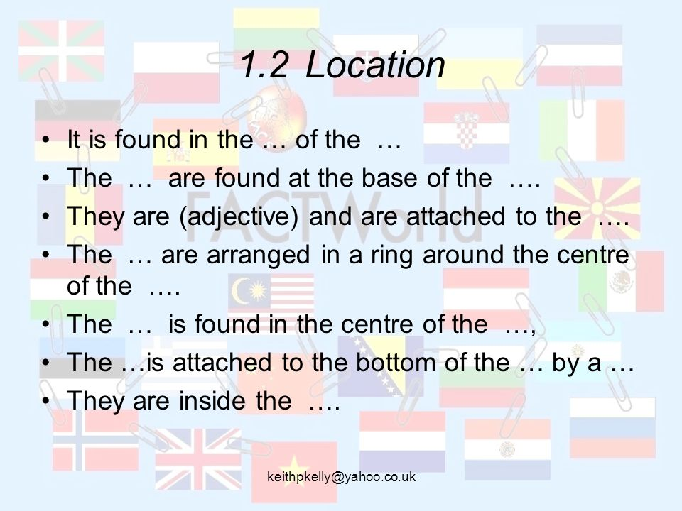 1.2Location It is found in the … of the … The … are found at the base of the ….