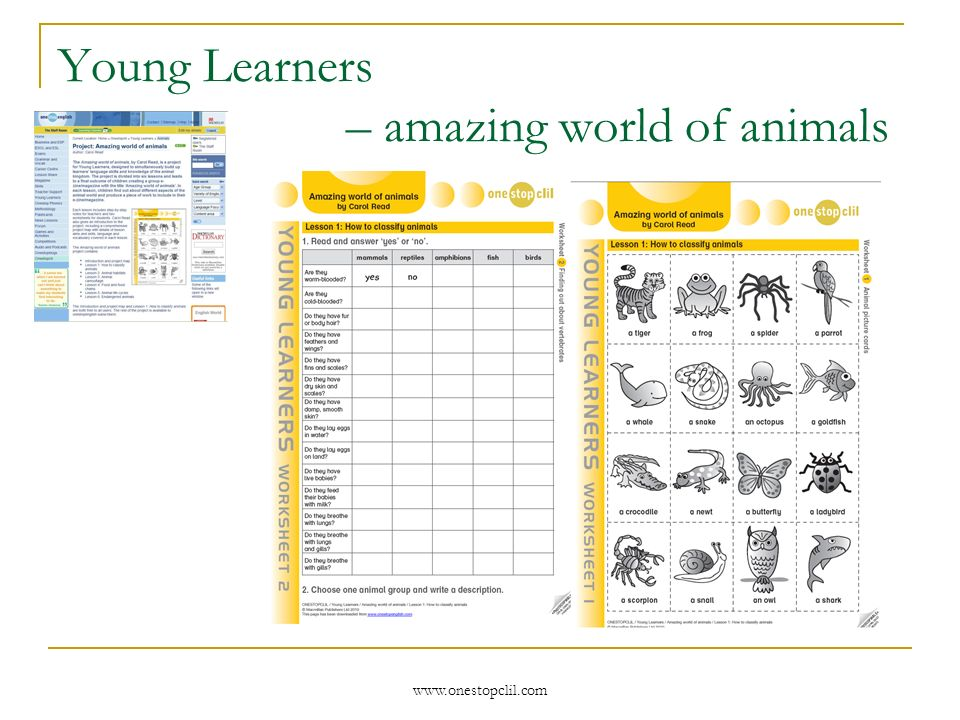 www.onestopclil.com Young Learners – amazing world of animals