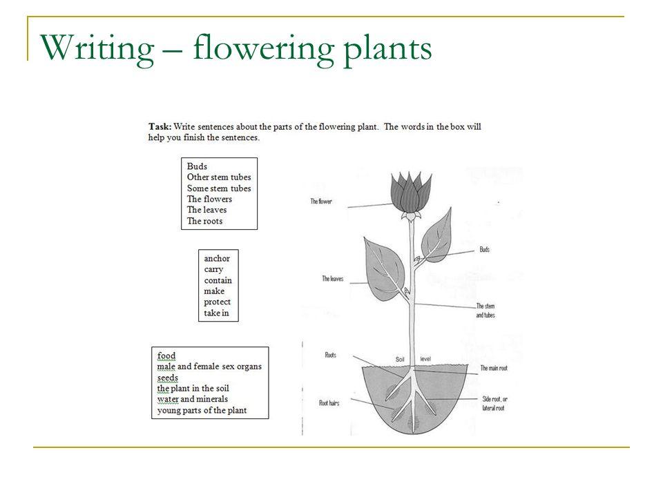 Writing – flowering plants
