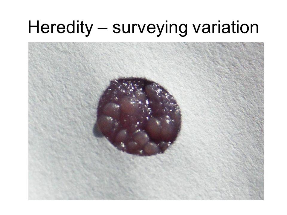Heredity – surveying variation