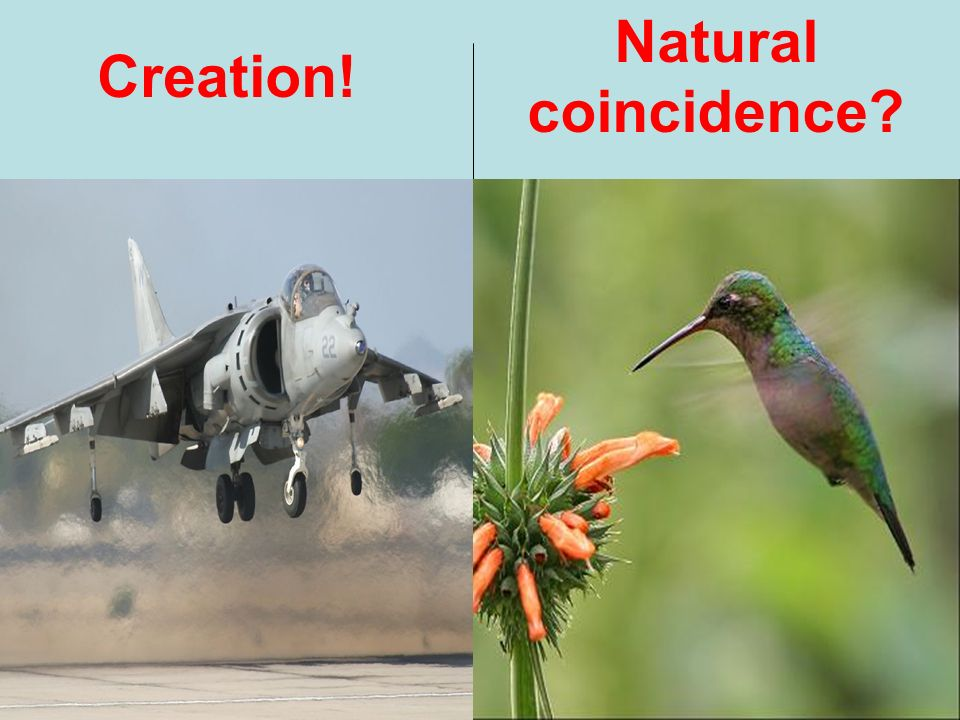 Creation! Natural coincidence