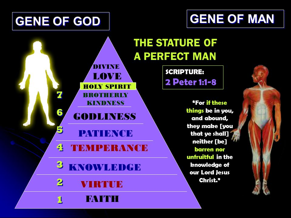 GENE OF GOD GENE OF MAN THE STATURE OF A PERFECT MAN FAITH VIRTUE KNOWLEDGE TEMPERANCE PATIENCE GODLINESS DIVINE LOVE 76543217654321 76543217654321 BROTHERLY KINDNESS HOLY SPIRIT SCRIPTURE: 2 Peter 1:1-8 For if these things be in you, and abound, they make [you that ye shall] neither [be] barren nor unfruitful in the knowledge of our Lord Jesus Christ.
