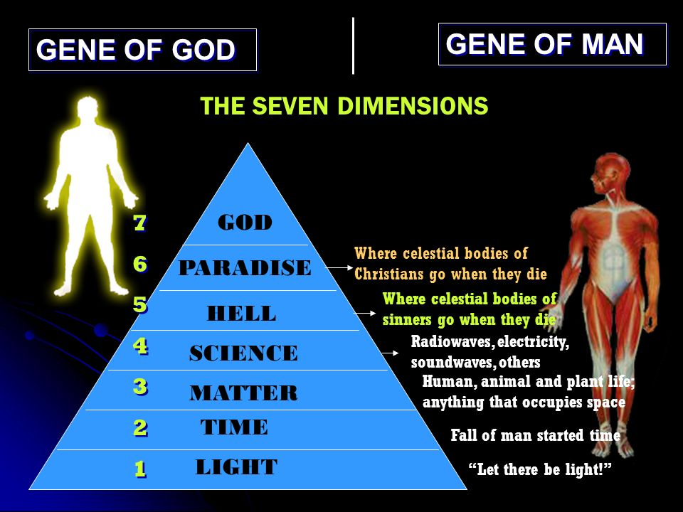 GENE OF GOD GENE OF MAN THE SEVEN DIMENSIONS LIGHT TIME MATTER SCIENCE HELL PARADISE GOD 76543217654321 76543217654321 Where celestial bodies of Christians go when they die Where celestial bodies of sinners go when they die Radiowaves, electricity, soundwaves, others Human, animal and plant life; anything that occupies space Fall of man started time Let there be light!