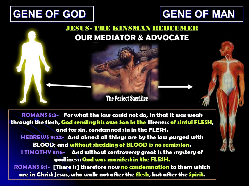 GENE OF GOD GENE OF MAN ROMANS 8:3- For what the law could not do, in that it was weak through the flesh, God sending his own Son in the likeness of sinful FLESH, and for sin, condemned sin in the FLESH.