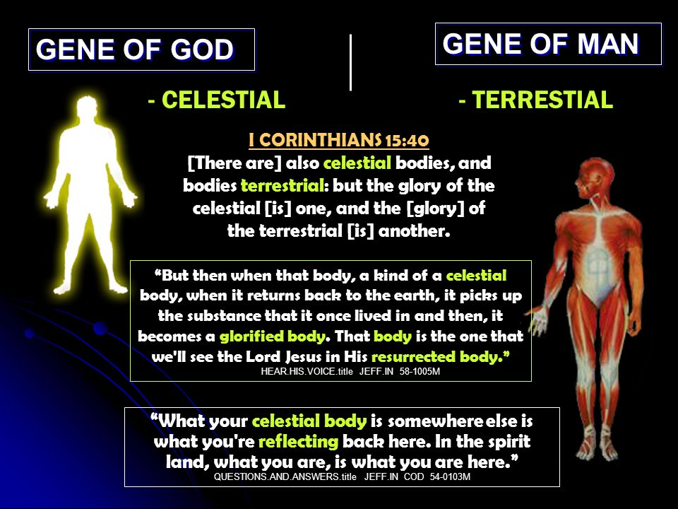 GENE OF GOD GENE OF MAN - CELESTIAL- TERRESTIAL I CORINTHIANS 15:40 [There are] also celestial bodies, and bodies terrestrial: but the glory of the celestial [is] one, and the [glory] of the terrestrial [is] another.