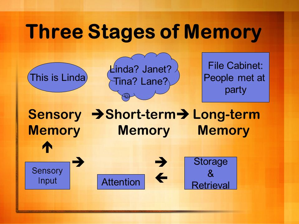 Three Stages of Memory Sensory Short-term Long-term MemoryMemory Memory This is Linda Linda? Janet? Tina? Lane? File Cabinet: People met at party Sens