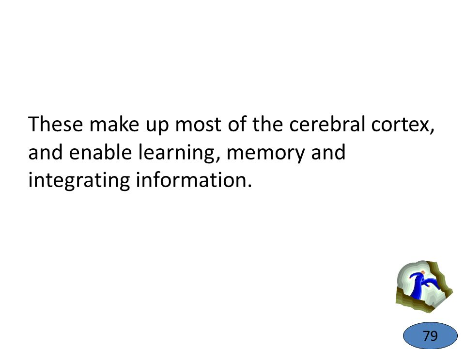 These make up most of the cerebral cortex, and enable learning, memory and integrating information. 79