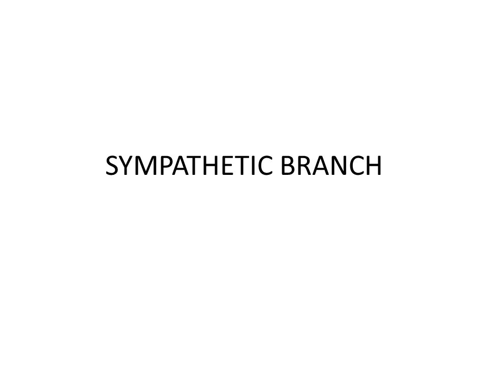 SYMPATHETIC BRANCH
