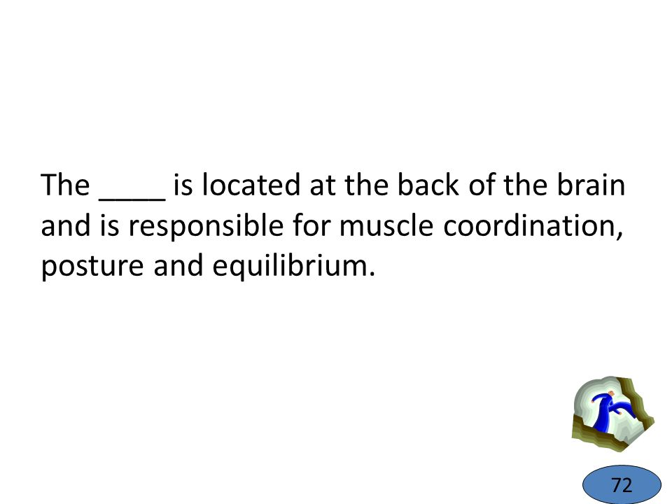 The ____ is located at the back of the brain and is responsible for muscle coordination, posture and equilibrium. 72