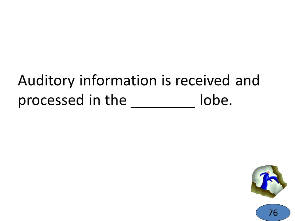 Auditory information is received and processed in the ________ lobe. 76