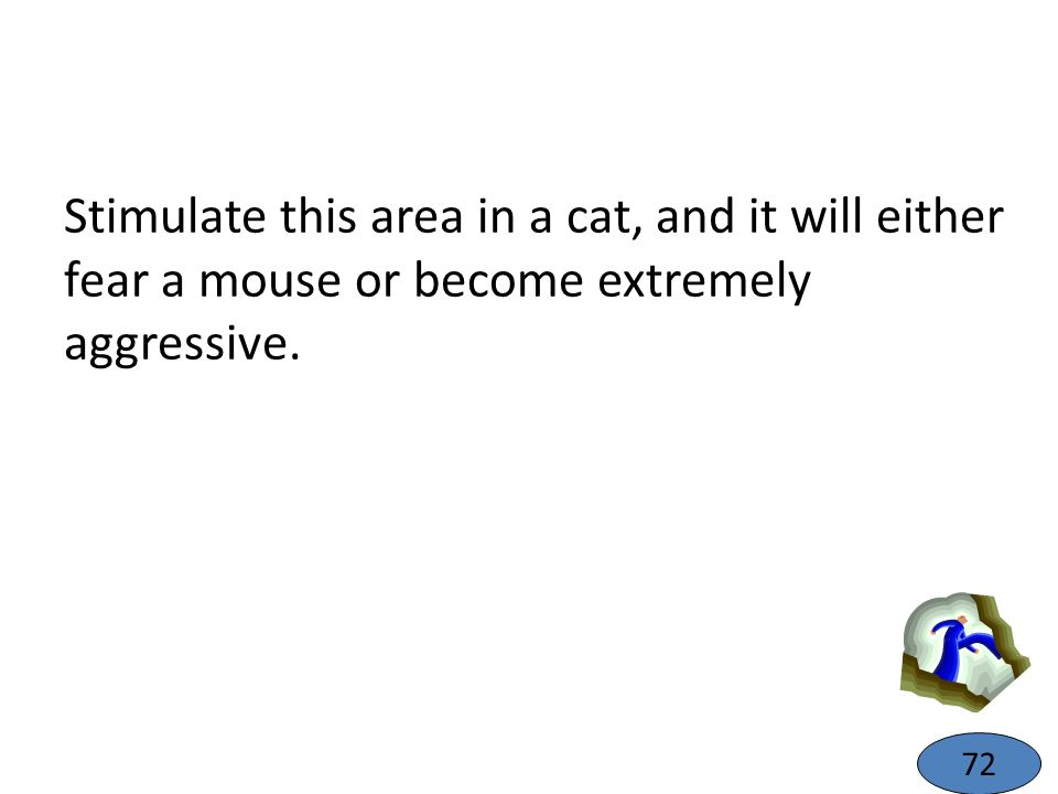 Stimulate this area in a cat, and it will either fear a mouse or become extremely aggressive. 72