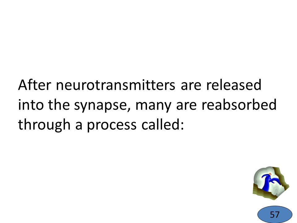 After neurotransmitters are released into the synapse, many are reabsorbed through a process called: 57