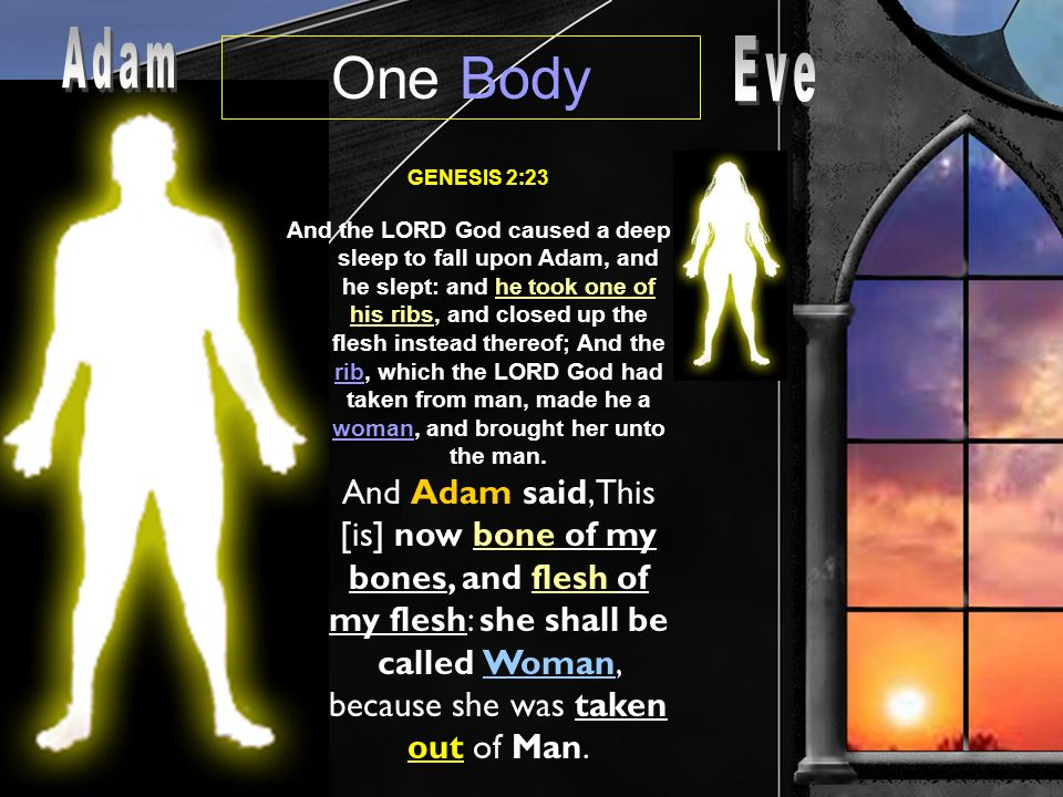 One Body GENESIS 2:23 And the LORD God caused a deep sleep to fall upon Adam, and he slept: and he took one of his ribs, and closed up the flesh instead thereof; And the rib, which the LORD God had taken from man, made he a woman, and brought her unto the man.