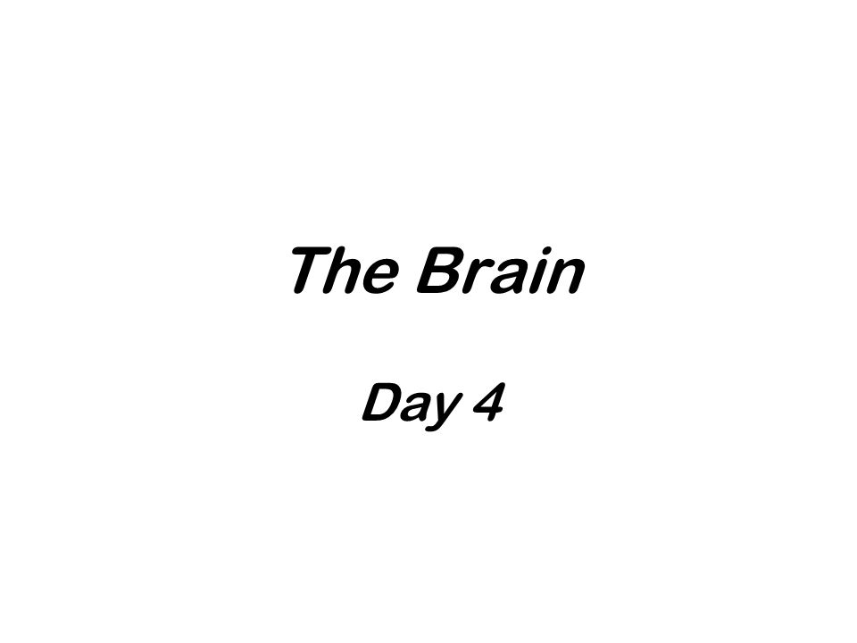 The Brain Day 4