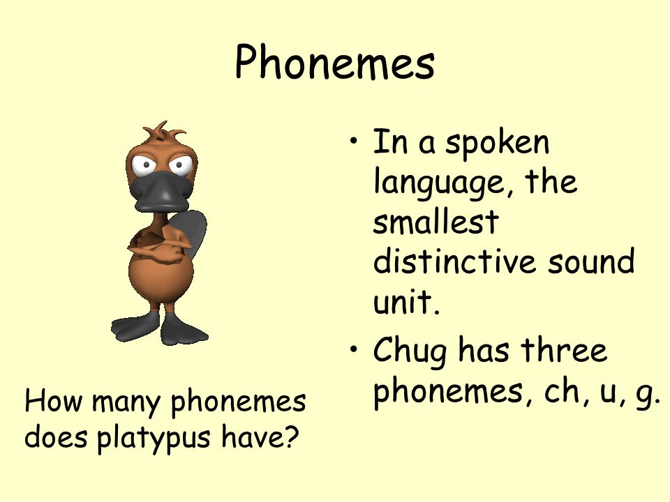 Phonemes In a spoken language, the smallest distinctive sound unit. Chug has three phonemes, ch, u, g. How many phonemes does platypus have?