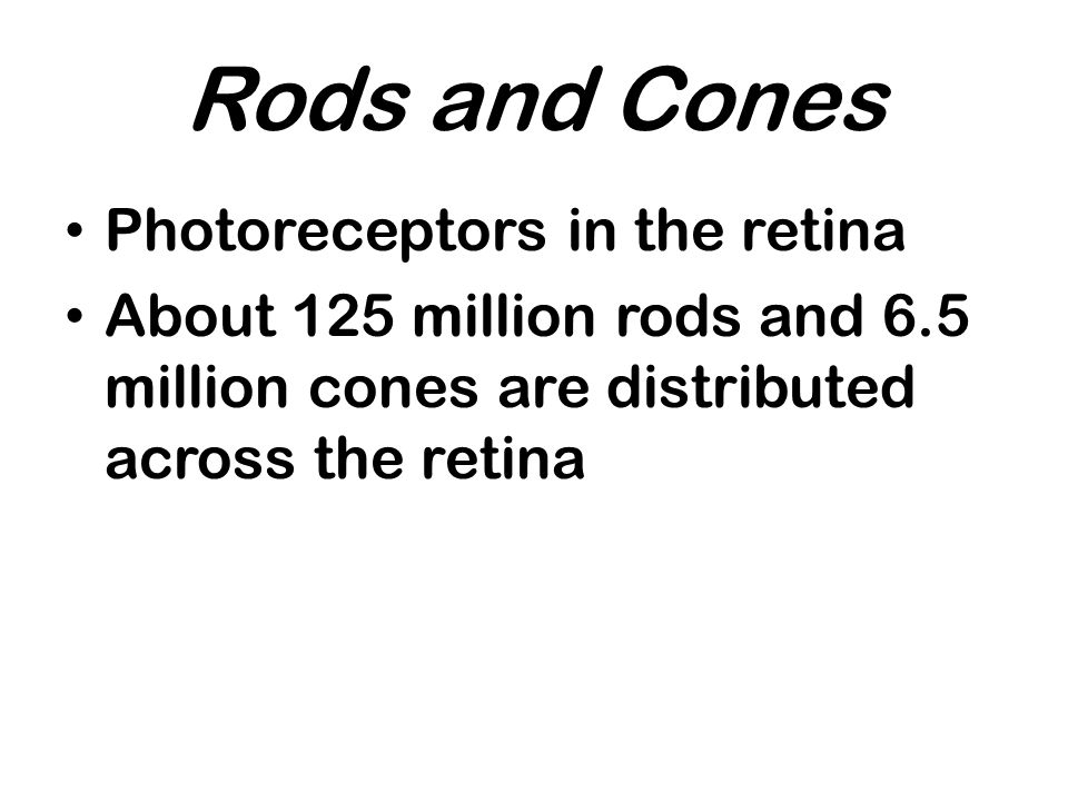 Rods and Cones Photoreceptors in the retina About 125 million rods and 6.5 million cones are distributed across the retina
