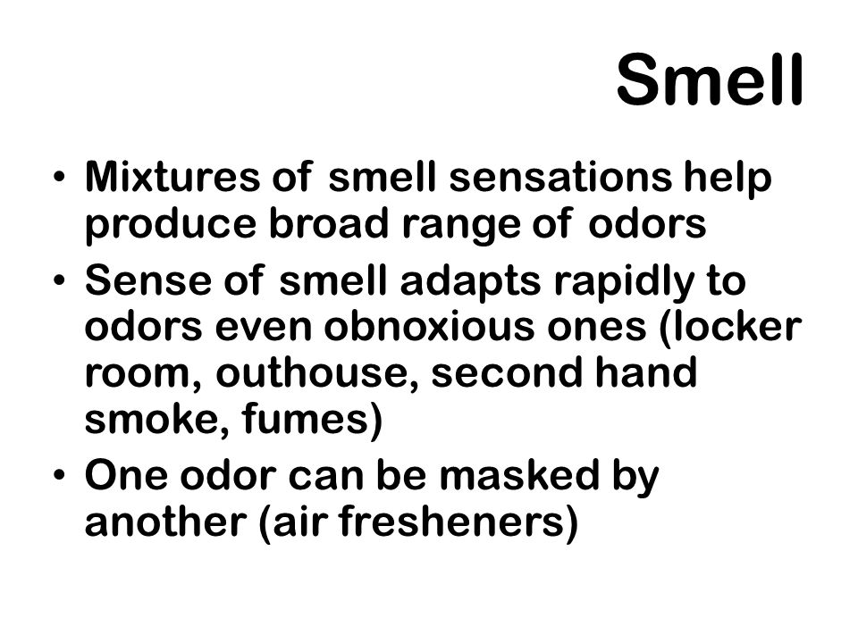 Smell Mixtures of smell sensations help produce broad range of odors Sense of smell adapts rapidly to odors even obnoxious ones (locker room, outhouse