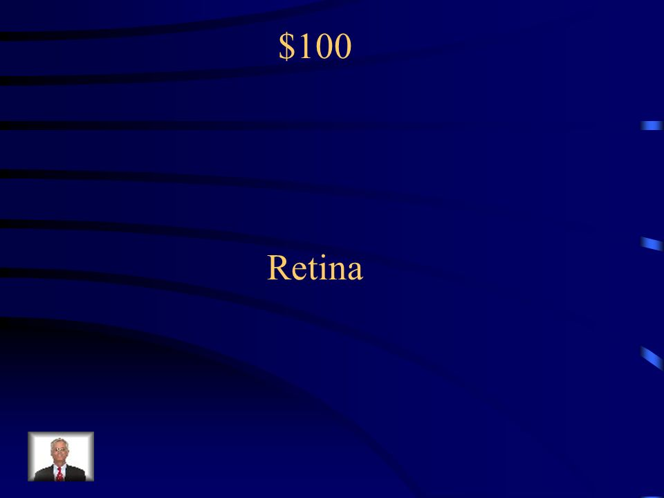 $100 The light sensitive inner surface of the eye, containing the rods and cones: