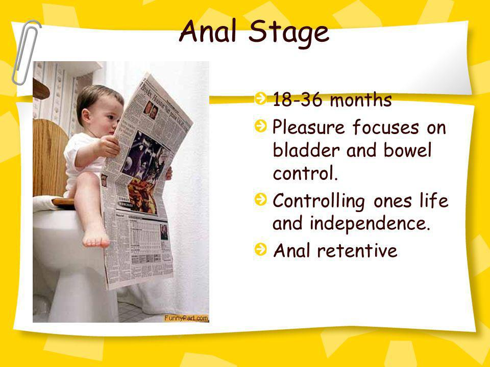 Anal Stage 18-36 months Pleasure focuses on bladder and bowel control. Controlling ones life and independence. Anal retentive