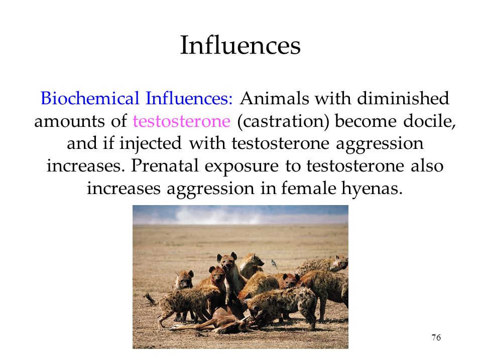 76 Influences Biochemical Influences: Animals with diminished amounts of testosterone (castration) become docile, and if injected with testosterone ag
