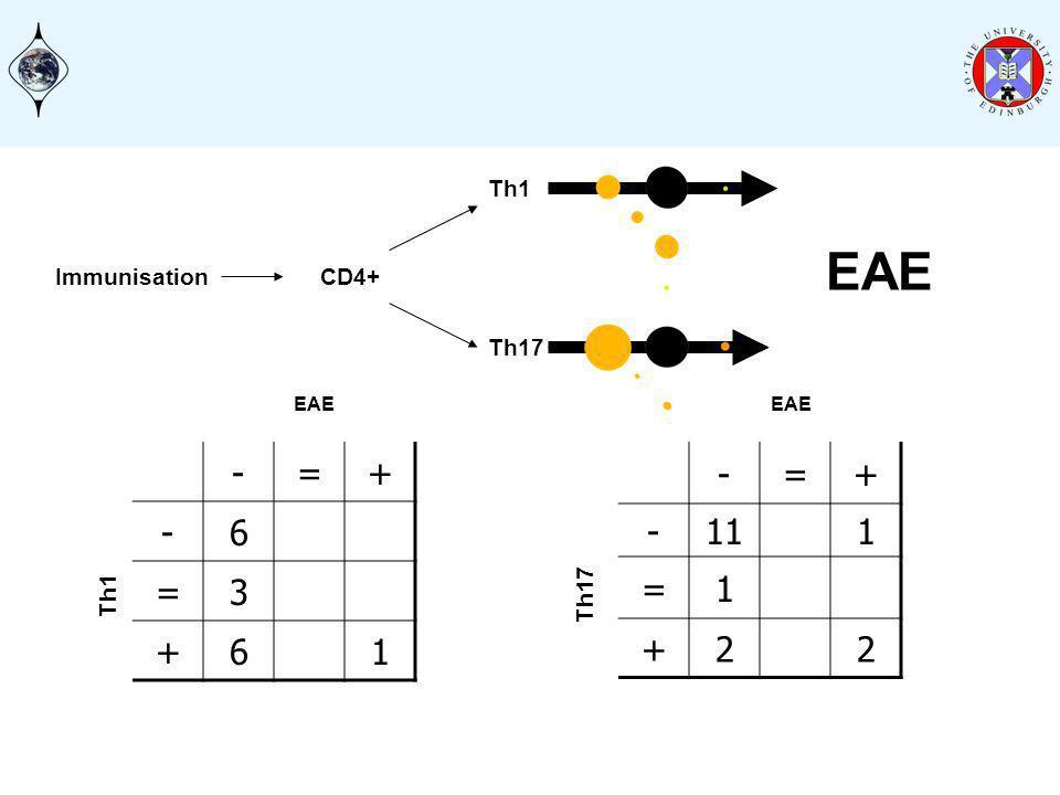 Immunisation EAE Th17 Th1 CD4+ -=+ -6 =3 +61 EAE Th1 -=+ -111 =1 +22 EAE Th17